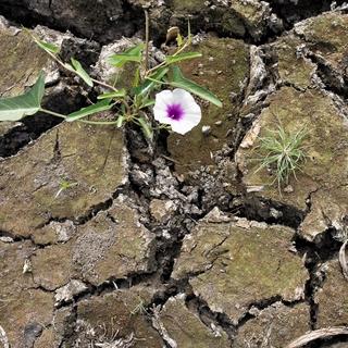 פרח בסלע - טיפול רגשי למערכות יחסים מורכבות