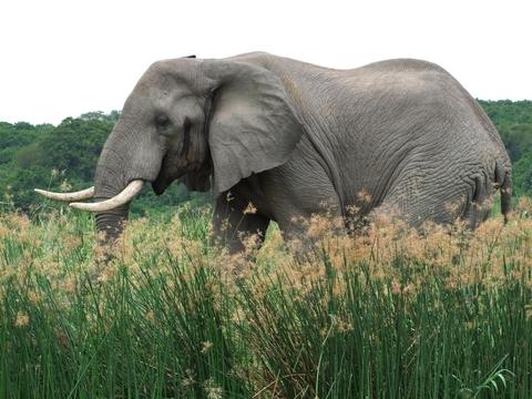 היכן מסתתר הפיל שלי? מי ראה אותו?