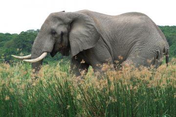 הפיל שאתה לא רואה